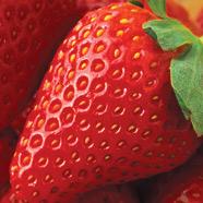 Strawberry Exfoliant