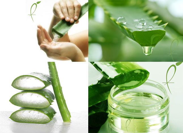 Image result for Aloe Vera Gel